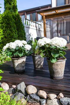 Onko terassi jo korkattu? #tikkurila #maalaustalkoot #terassi #piha #ulkomaalaus #koti #talo #kesä Koti, Joinery, Cladding, Paint Ideas, Exterior, Outdoor Decor, Plants, Painting, Home Decor