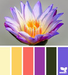 Design Seeds® Blossoming Brights