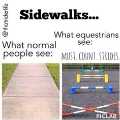 Lol I sometimes measure the strides to the next crack in the street. Haha I thought I was the only one. Equestrian Funny, Equestrian Quotes, Equestrian Problems, Funny Equine, Funny Horse Memes, Funny Horses, Horse Humor, Funny Animals, Horse Riding Quotes