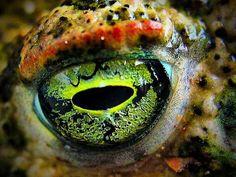 Eye of a frog - Macro Photography of Animal Eyes