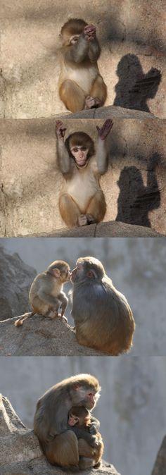 Depuis le 8 février dernier et le Nouvel An chinois, nous sommes entrés dans l'année du singe. Les zoos à travers toute l'Asie mettent donc en avant leurs primates, comme ces macaques photographiés au sein du parc zoologique de Yantai, une ville portuaire située dans l'est de la Chine, face à la Corée du Nord. L'agence Xinhua s'y est rendue pour immortaliser la colonie de ces petits animaux.