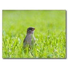Little Bird Postcard #bird #photography #nature #animal #wildlife
