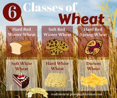 All Wheat is Not Created Equal: Six Classes of Wheat