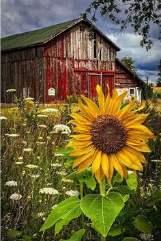 Wild weeds, sunflower seeds !!! More
