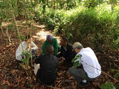 IAT crew discussing the recent macadamia nut harvest with farmer Jane Ngari and co-op members