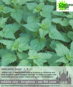 Herbal Medicine Natural Lyme Disease Treatment Without Antibiotics Herbal Remedies, Health Remedies, Home Remedies, Natural Remedies, Healing Herbs, Medicinal Plants, Natural Healing, Natural Skin, Natural Medicine