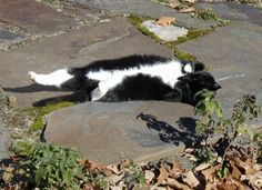 Sunny Day Roll on the Flagstone