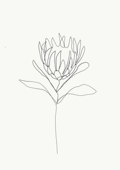 One single line is used to make a delicate flower. Credit: Emma Ryan Protea single line drawing Line Drawing Tattoos, Flower Line Drawings, Botanical Line Drawing, Line Flower, Line Tattoos, Tattoo Drawings, Line Drawing Art, Contour Line Drawing, Drawing Flowers