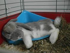 Since I got my bunnies I adore watching bunny photos online and have quite a collection. Only Daisy and Charlie photos are mine. Cute Baby Bunnies, Bad Bunny, Funny Bunnies, Cute Baby Animals, Bunny Bunny, Funny Pets, Bunny Rabbits, Easter Bunny, Hamsters