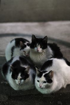 awww, I want a collection of b&w kitties!!
