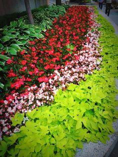 Street View, Pretty, Plants, Flora, Plant