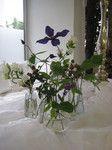 Clematis und co.by Lily deluxe Blumen