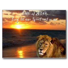 Lion of Judah Collection Post Cards