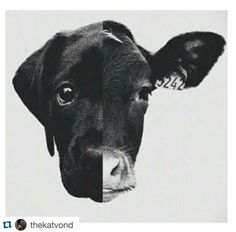 Where does the animal we love and the animal we eat end and begin? Look closely...animals are my friends and I don't eat my friends