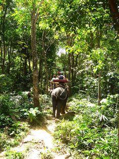 Go on an elephant trek in Thailand.