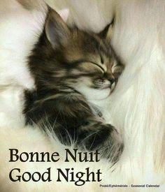 #BuenasNochesPeludos #GoodNight #BonneNuit #FelizNoche #Adormir #DulcesSueños #Mascotas #Mascottes #Pets #Mascot #Peludos #Hairy #Furry #Shaggy #Cats #gato #Ilovecats #Perros #Dog #Ilovedog #Noalabandono #adoptanocompres #RincóndelaVictoria