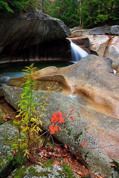Courting the Old Man Franconia Notch, White Mountains, Great Vacations, Old Men, Waterfalls, The Rock, Basin, State Parks, Swan