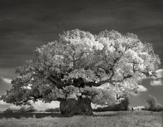 """Beth Moon, a San Francisco photographer, spent 14 years travelling to capture the breath-taking photographs in the book """"Ancient Trees: Portraits Of Time"""". Beautiful Dark Twisted Fantasy, Dark And Twisted, Old Oak Tree, Old Trees, Tree Woman, Tree Photography, Photography Magazine, Nature Tree, Tree Forest"""