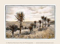 Take a visual safari. Explore the Southern African landscape.