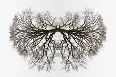"""""""Mirrors"""" est un projet de la photographeTraci Griffin, qui cherche à imposer la notion de symétrie dans les formes aléatoires de la nature comme les branches d'arbres ou les cheveux. Une sorte de jeu de miroir à la façon d'un test de Rorschach naturel…"""