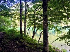 Kansallispuisto Montenegrossa Montenegro, Trunks, Plants, Drift Wood, Tree Trunks, Plant, Planets