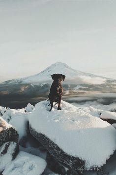 Travel Buddy (rodtrvn) | instagram