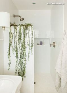 beth kooby design Atop the shower stall. If your bathroom has a partial wall separating the shower f Bathroom Plants, Bathroom Spa, Bathroom Ideas, Shower Plant, Plants In The Shower, Small Shower Remodel, Eclectic Bathroom, Small Showers, Transitional Decor