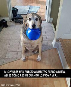 Nuestro perro a dieta. #humor #risa #graciosas #chistosas #divertidas