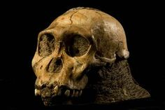 Human Evolution's Biggest Questions May Find Answers in New Analysis