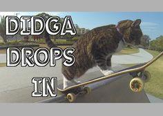 Meet Didga, The Skilled Skateboarding Cat #Pets #Animals