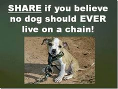 Poor doggy. I would put the person responsible on that chain!
