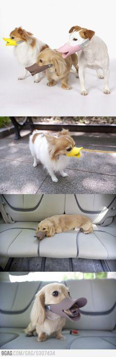 Duckface Protective Muzzle for Dogs. HAHAHA naughty dogs look funny!