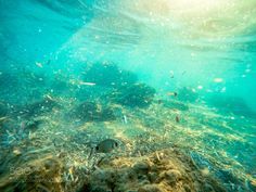 Underwater by LaurentiuIsaila #nature #photooftheday #amazing #picoftheday #sea #underwater
