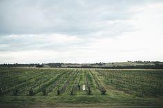 Hunter Valley Wedding, Hope Estate | Damien Milan Sydney Wedding Photographer and Storyteller