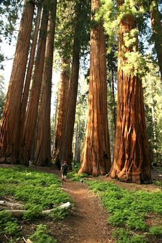 Sequoia Hiking Trails