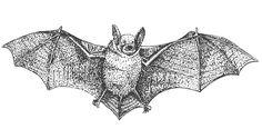 bat pen illustration