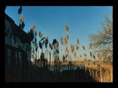 The Cinematic Orchestra - Breathe (ft. Fontella Bass) - YouTube