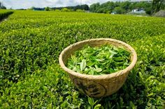 Genuine Japanese Green Tea directly from Japanese Tea Farm. Sencha, Gyokuro, Matcha and many more. Green Tea Benefits, Matcha Benefits, Health Benefits, Health Foods, Thé Vert Lipton, Best Loose Leaf Tea, Lipton Green Tea, Different Types Of Tea, Organic Green Tea