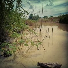 #lake #swamp #brown #phonephotography