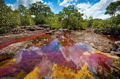 Каньо Кристалес-река в Колумбии рассматривается многими как самый красивый в мире. Известн...