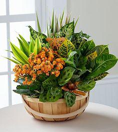 Wishes Harvest Dish Garden Flowers Online - Garden Basket, Plant Basket, Dish Garden, Garden Terrarium, Garden Plants, Indoor Plants, House Plants Decor, Plant Decor, Container Plants