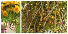 Outdoor Play: Dandelion Picking then stringing through collander