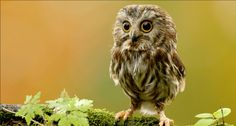 An adorable owl picture to brighten your day <3