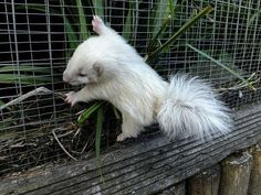 Okay even though this is a baby skunk I still think this little guy is adorable!
