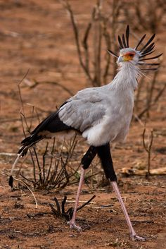 Secretary Bird (just in time for administrative assistant day)