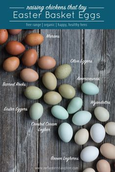 Raising Chickens That Lay Easter Basket Eggs Brown Things can u color brown eggs for easter Chicken Pen, Diy Chicken Coop, Chicken Eggs, Farm Chicken, Chicken Lady, Chicken Egg Colors, Easter Egger Chicken, City Chicken, Chicken Tractors