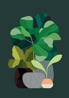 Rob Bailey | Plants (self-initiated)