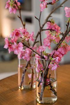Galhos de cerejeira ficam lindos em vasos cilíndricos – que podem ser até copos de vidro