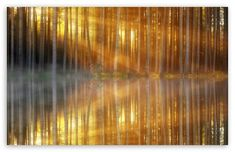 Sunbeams through Forest Trees, Lake Reflection Ultra HD Desktop Background Wallpaper for : Widescreen & UltraWide Desktop & Laptop : Multi Display, Dual Monitor : Tablet : Smartphone Iphone Wallpaper Herbst, Free Fall Wallpaper, Hd Wallpaper, Forest Light, Forest Art, Birch Forest, Tree Wall Art, Tree Art, 8k Ultra Hd