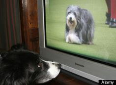 Dog TV: Cable Channel for Dogs Left at Home.  Hmm.  My dog does notice dogs on TV, but I think it's more confusing for him than soothing.